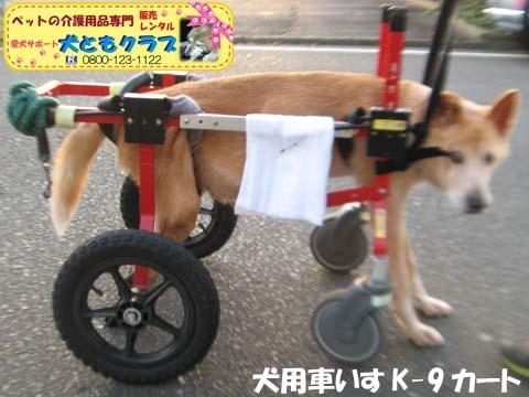 犬用車椅子K9カートゴン太くん用2017110207.jpg