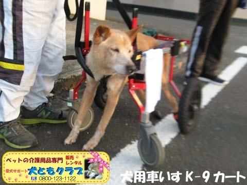 犬用車椅子K9カートゴン太くん用2017110208.jpg