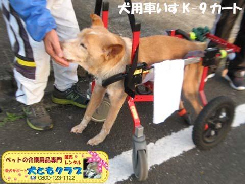 犬用車椅子K9カートゴン太くん用2017110209.jpg