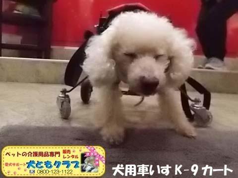 犬用車椅子K9カートトイプードル2020112602.jpg