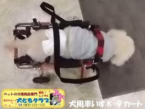 犬用車椅子K9カートトイプードル2020112603.jpg