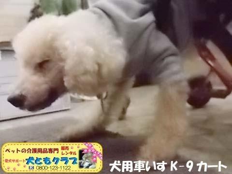 犬用車椅子K9カートトイプードル2020112604.jpg