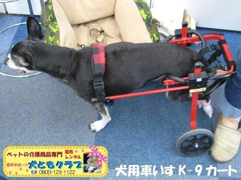犬用車椅子K9カートミニチュアピンシャのみの吉くん2016042303.jpg