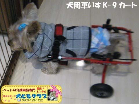 犬用車椅子K9カートヨークシャーテリアのバルコくん2017102402.jpg