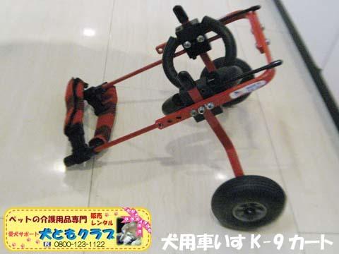 犬用車椅子K9カートヨークシャーテリアのバルコくん2017102405.jpg