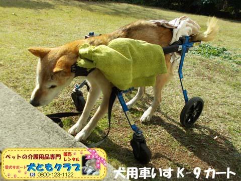 犬用車椅子K9カート柴犬のハナちゃん用2017112901.jpg