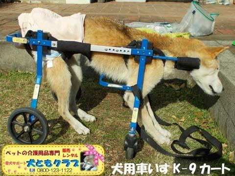犬用車椅子K9カート柴犬のハナちゃん用2017112902.jpg
