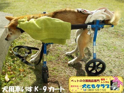 犬用車椅子K9カート柴犬のハナちゃん用2017112903.jpg