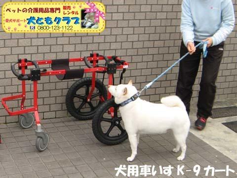犬用車椅子K9カートXLサイズ2015031804.jpg