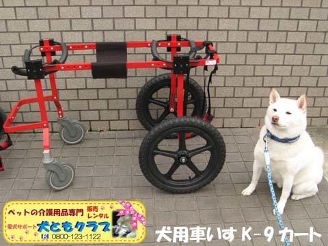 犬用車椅子K9カートXLサイズ2015031805.jpg
