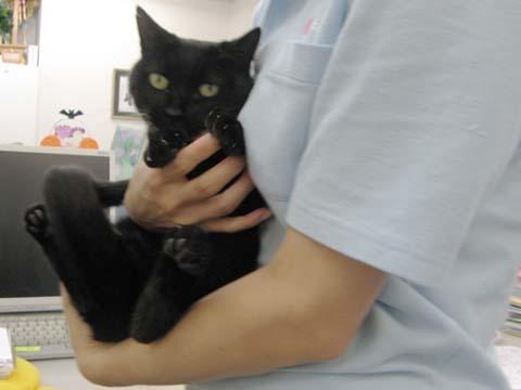 黒猫のクー2013092601.jpg