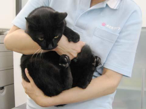 黒猫のクー2013092603.jpg