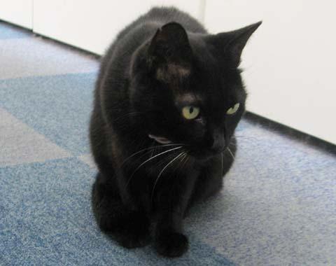 黒猫クー2013090501.jpg