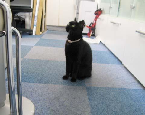 黒猫クー2013090502.jpg