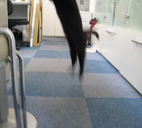 黒猫クー2013090503.jpg