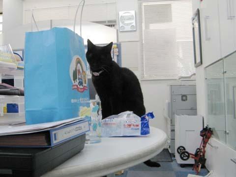 黒猫クー2013090504.jpg